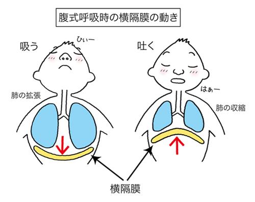 「腹式呼吸」完全マスター編 ① ~腹式呼吸ってなに?~